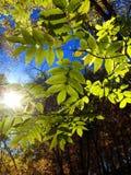 Sun, der durch emporragt Lizenzfreies Stockbild