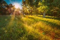 Sun, der durch grünes Laub im grünen Park über frischem Gras scheint Lizenzfreie Stockfotos