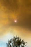 Sun, der durch Rauchwolken über Baum vom verheerenden Feuer späht Stockfotografie