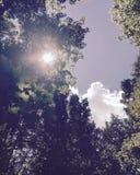 Sun, der durch scheint Stockfotos