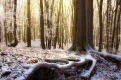 Sun, der in einen schönen Wald mit gefrorenen Bäumen steigt Lizenzfreie Stockbilder