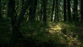 Sun, der im Wald durch tiefes scheint stock video footage