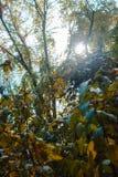 Sun, der im Wald durch Vegetation auf einer Wanderung emporragt Stockfotografie