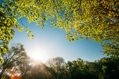 Sun, der unter Frühlings-Überdachung des Baums scheint Laubwald, Sommer Lizenzfreie Stockfotografie