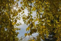 Sun, der von den Niederlassungen im Herbst scheint Stockfotos