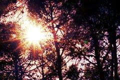 Sun derrière des arbres Photos libres de droits
