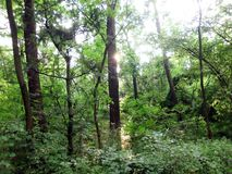 Sun derrière l'arbre Photographie stock libre de droits