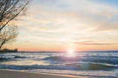 Sun derrière la branche Image stock