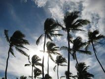 Sun derrière le `s de palmier Photographie stock