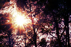 Sun detrás de árboles Fotos de archivo libres de regalías
