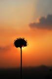 Sun detrás de la flor Fotografía de archivo libre de regalías