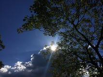 Sun detrás de las nubes y de un árbol fotos de archivo