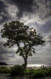 Sun detrás de un árbol en una playa en la isla grande, Hawaii Imagenes de archivo