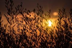 Sun detrás del arbusto Fotografía de archivo