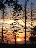 Sun di Iowan che mette su un campo di mais attraverso gli alberi Immagine Stock