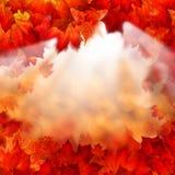 Sun di mattina e di Autumn Maple Leaves astratto Immagini Stock Libere da Diritti