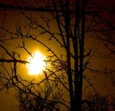 Sun dietro gli alberi Fotografie Stock Libere da Diritti