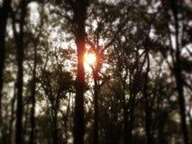 Sun dietro gli alberi Fotografia Stock