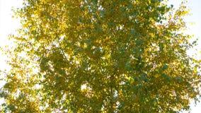 Sun dietro i rami della betulla Lasso di tempo 4K video d archivio