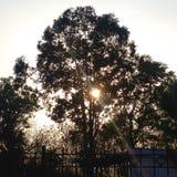 Sun dietro l'albero Immagine Stock