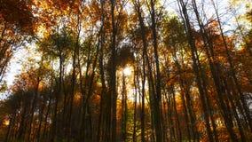 Sun dietro la foresta del faggio Fotografie Stock
