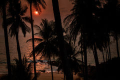 Sun disk over sea and beach through silhouette of palms Stock Photography