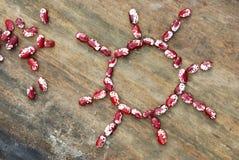 Sun dos feijões vermelhos e brancos Imagem de Stock Royalty Free