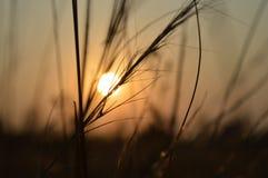 Sun down. Silute sundown evening Royalty Free Stock Photos