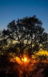 Sunset. Sun under the tree life Stock Photography