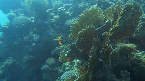 Sun-Drenched Coral Reef stock video