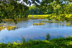 The sun-drenched green shore of a quiet lake or pond is surrounded by tall, leafy trees. resting place, fishing and. Picnic . For your design stock photo
