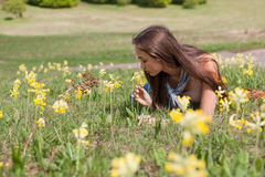Sun drenched meadow. Stock Image