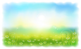 Sun-drenched meadow with daisies. Royalty Free Stock Images