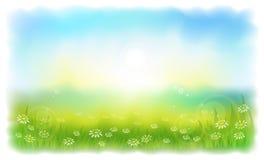 Sun-drenched Wiese mit Gänseblümchen. Lizenzfreie Stockbilder