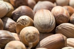 Sun dried brown, fresh in shell, hazelnuts background. Low angle extreme macro detailed crop Stock Images