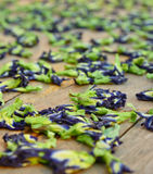 Sun dried butterfly pea flowers Royalty Free Stock Images