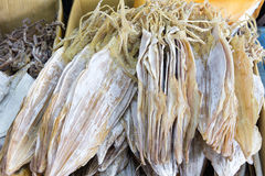 Sun Dried Cuttlefish Royalty Free Stock Images