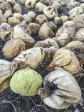 Sun dried figs Stock Images