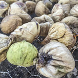 Sun dried figs Royalty Free Stock Images