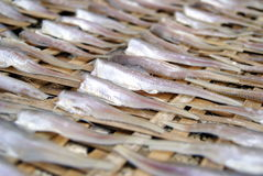 Sun-dried fish Royalty Free Stock Image