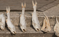 Sun dried fish Royalty Free Stock Images