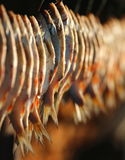 Sun-dried fish Stock Photo