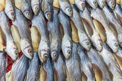 Sun dried fish. Sun dried salty fish. Stock-fish Royalty Free Stock Photos