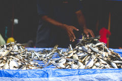 Sun dried fish seller. A market trader arranging his sun dried fish ready for sale to customers Royalty Free Stock Photo