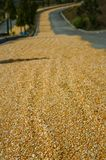 Sun dried grain highway philippines stock images