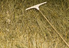 Sun dried grass and rake Stock Image