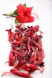 Sun Dried Hibiscus red Flower with steam Stock Image