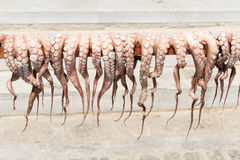 Sun-dried octopus Royalty Free Stock Photo