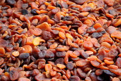 Sun-dried organiska turkiska aprikosar Arkivfoto