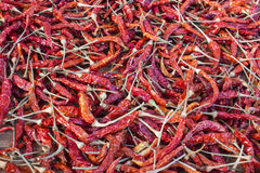 Sun Dried Red Thai Chilies. The organic chilies was growth, harvested and dried by natural light of sun in local of Thailand. That's become the important past of Royalty Free Stock Photos